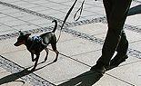 """Ansturm auf Aktionstag """"Hunde in Wien"""""""