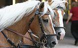 Pkw stieß in Wien gegen Pferdegespann