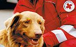 Das Wiener Rote Kreuz beim Wiener Sicherheitsfest