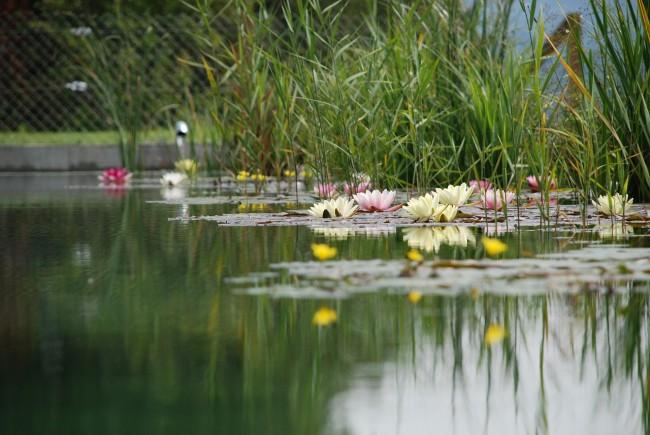 Schwimmteich im Garten: Die Alternative zum Pool