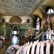 Naturhistorisches Museum: Abendschwärmer aufgepasst