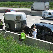 Gestürztes Pferd sorgte für Sperre auf der A23