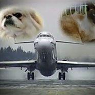 Fluglinie für Haustiere gestartet