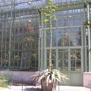 Blühende Agave im Schönbrunner Wüstenhaus