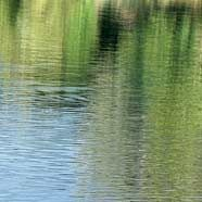 85-jähriger Wiener ertrank in Teich