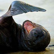 Wie ein Filmstar: Robbenbaby flirtet mit der Kamera