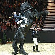 Fest der Pferde: Nur noch ein Jahr?