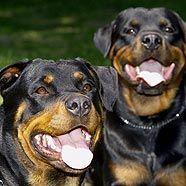 Opposition fordert strengere Regeln für Hundebesitzer