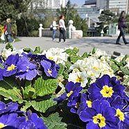 Blumen im Stadtpark