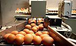 Eier sollen in Handel gelangt sein