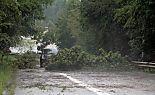 Umgeknickte Bäume in Belgien