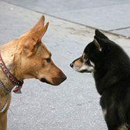 Hundekunde wird akademisch