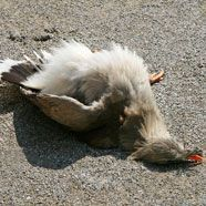 Hitze: Vögel in Schönbrunn stellen sich tot