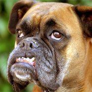 21-Jähriger in Wien überfallen: Angeblich Hund als Beute