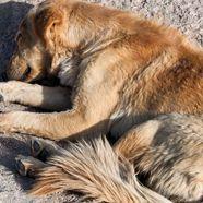 Hund brutal zu Tode geprügelt: Bedingte Freiheitsstrafe