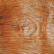 Tödlicher Unfall bei Baumschneidarbeiten