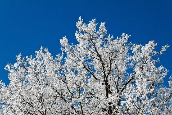 Wunderbare Winterlandschaft im Lainzer Tiergarten