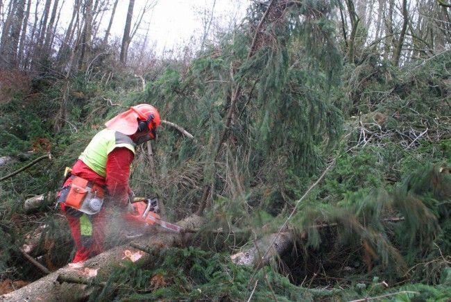 Einen Toten forderte ein Forstunfall im Burgenland
