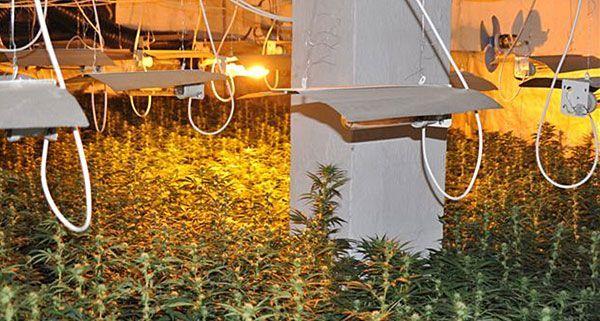 Diese Plantage mit 2.100 Cannabispflanzen wurde bereits im Oktober 2011 entdeckt