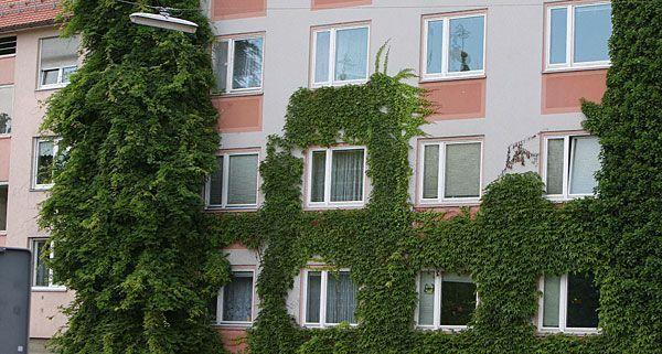 Fassadenbegünung ist auf der Wiener Nachhaltigkeitsmesse ein Schwerpunktthema