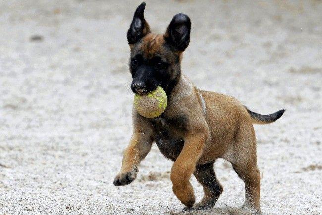 In Wien-Favoriten wurden kleine Hundewelpen zum Verkauf angeboten.