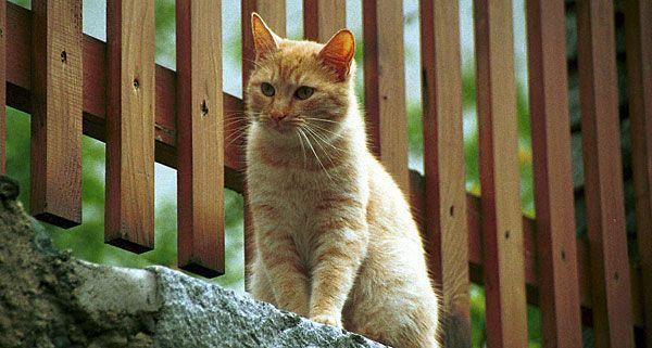 Eine Rarität sei die tote Katze gewesen.
