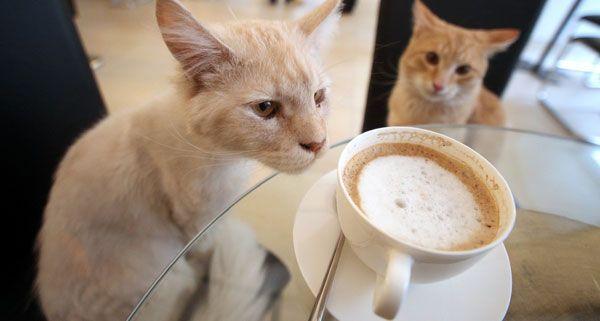 Ab dem 4. Mai kann im Café Neko mit Katzen geschmust und gespielt werden.