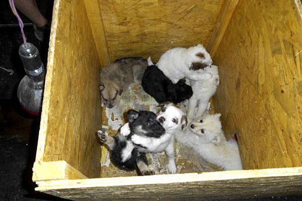 Noch ein paar weitere der geretteten Welpen erlagen einer schweren Viruserkrankung
