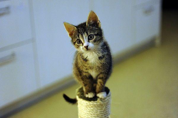Viele Tiere, nicht nur Katzen werden täglich ausgesetzt.
