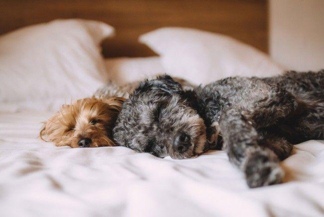 Auch Hunde brauchen mal Urlaub - zum Beispiel in einem Hundehotel in Wien