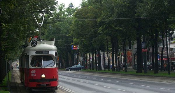 Wie viele Bäume müssen für den Ausbau des Ringstraßenradwegs gefällt werden?