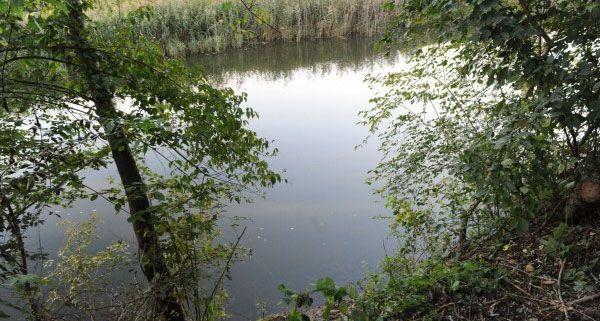 An diesem Ort in der Au an der Donau im Bezirk Tulln wurde die Frauenleiche entdeckt.