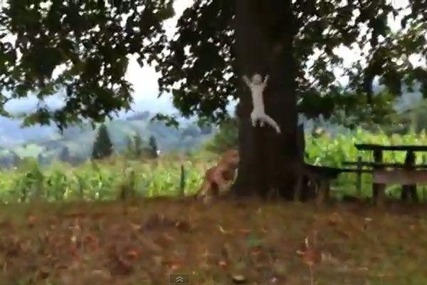 Hund von Katze ausgetrickst.