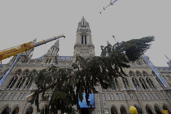 Bis der Christbaum am Rathausplatz steht, ist Jahr für Jahr einiger Aufwand nötig