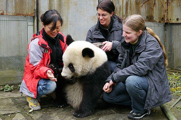 Fu Hu wurde in China mit offenen Händen empfangen - es geht ihm sichtlich gut