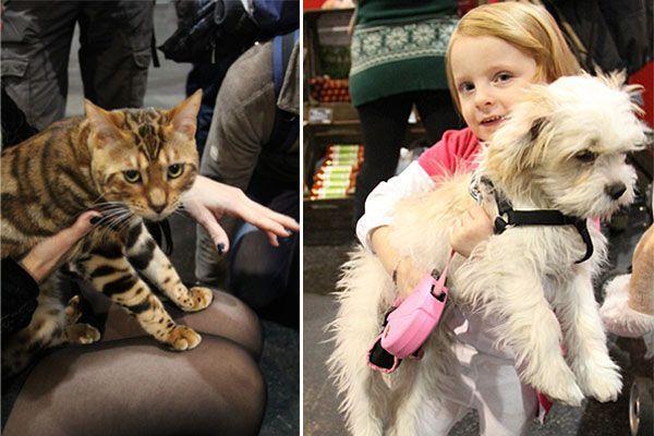 Auf der Haustiermesse kamen Tierfreunde voll auf ihre Kosten