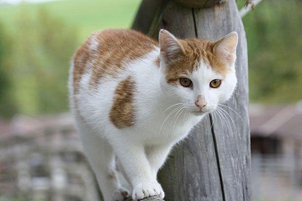 Wer sich eine Katze nach Hause holt, sollte sich gut überlegen, ob diese Freigang erhält