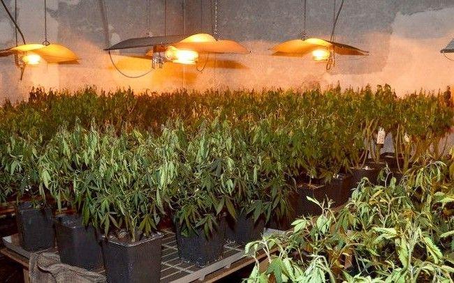 Hanfplantage nach Brand in Ottakring entdeckt