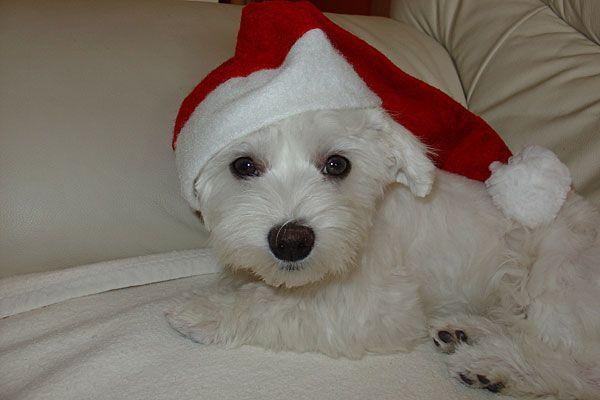 Die Adventzeit kann so schön sein - mit unseren Tipps gehen Sie und ihr Tier auf Nummer sicher