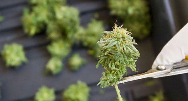 Die Polizei beschlagnahmte die Cannabis-Pflanzen den Mannes in Meidling.