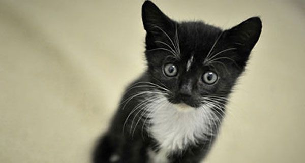 Zwei Tage verbrachte die Katze im Autorahmen, bis sie vom ÖAMTC-Pannenfahrer gerettet wurde.