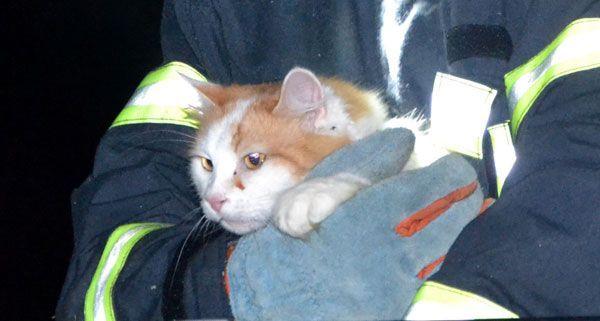 Kater Simba hatte sich am Wochenende zu hoch hinauf gewagt und musste von der Feuerwehr gerettet werden.