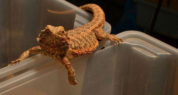 Reptilien hautnah und zum Anfassen gab es am Wochenende bei der Reptilienbörse in Wien.