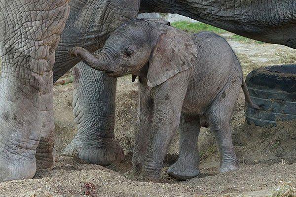Das kleine Elefantenmädchen in Schönbrunn