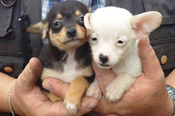 Allzu oft züchten skrupellose Welpenhändler Hunde unter desaströsen Bedingungen für schnellen Profit