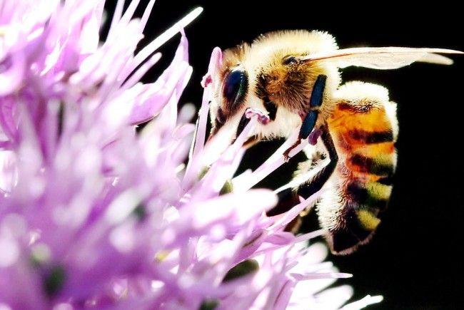 Greenpeace: Gartenpflanzen mit bienenschädlichen Pestiziden belastet