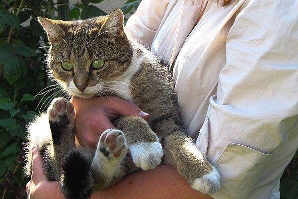 Das Motto am 4. Juni: Umarme deine Katze!