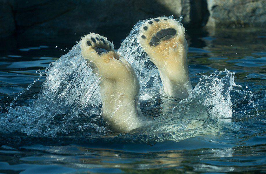 Abkühlung hitze in wien abkühlung für die tiere im schönbrunner zoo vienna