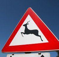 Alle sechs Minuten: Wildtierunfälle