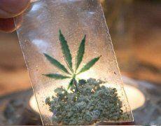 Warum Kapitalisten Cannabis legalisieren